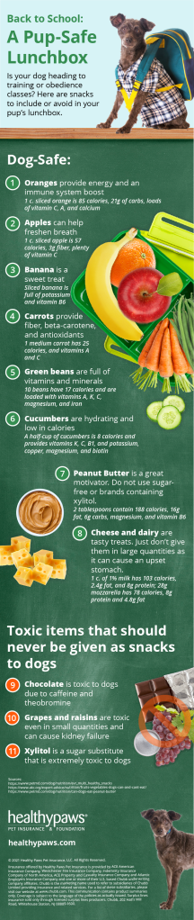 Back to school foods dogs can and can't eat graphic