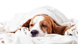 options for pain medication pets dogs