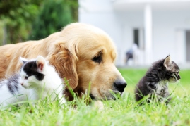 spring cleaning for pets