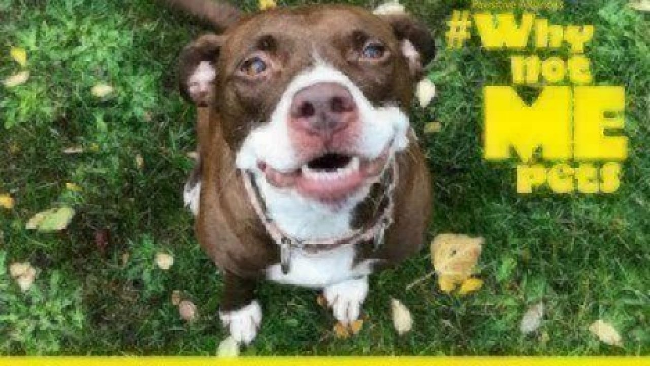 Dog Adoption: Kona #WhyNotMePets | Healthy Paws