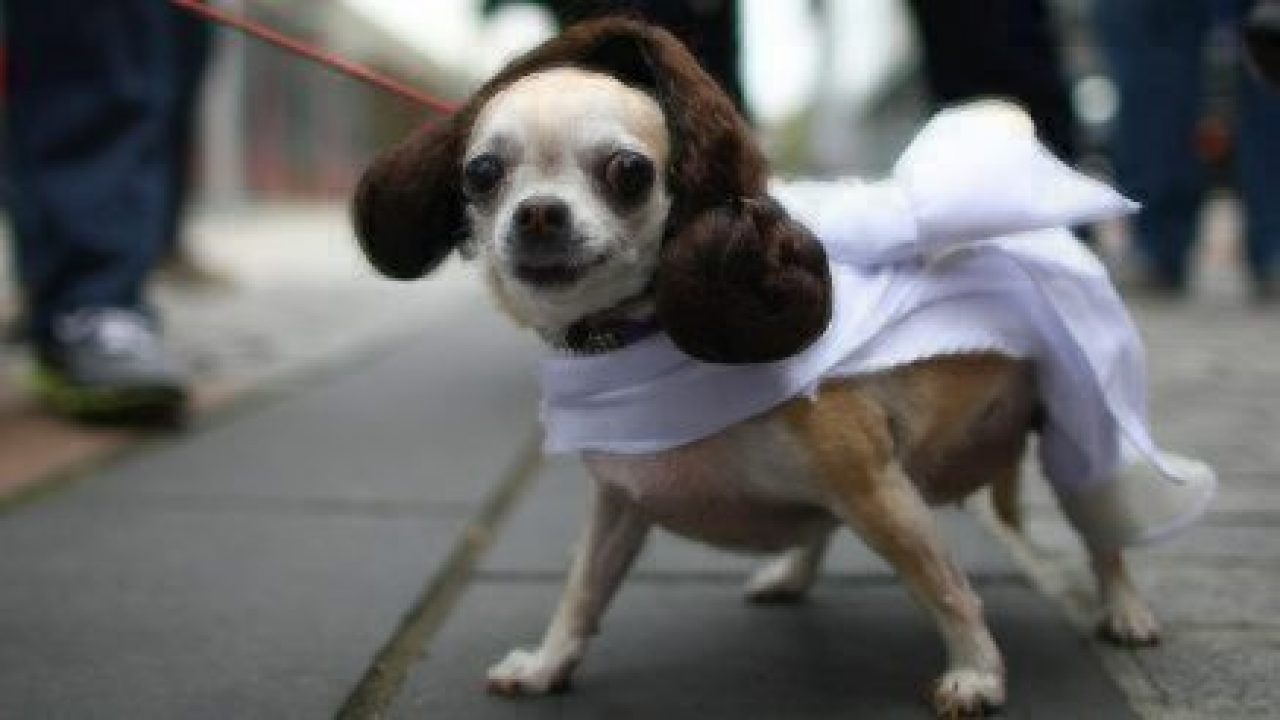 healthy paws princess leia & May the 4th Be With You | Healthy Paws