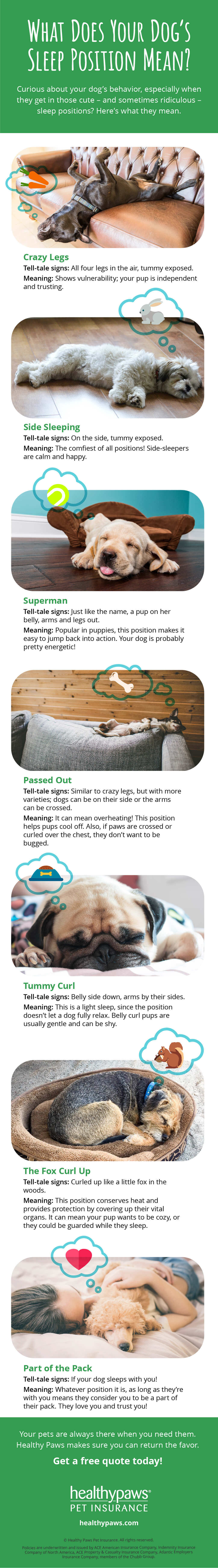 What Does Your Dog's Sleep Position Mean? | Healthy Paws