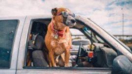 summer car trip with dog