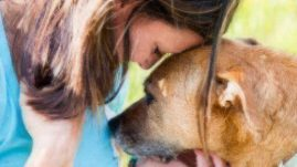 do dogs care if you cry