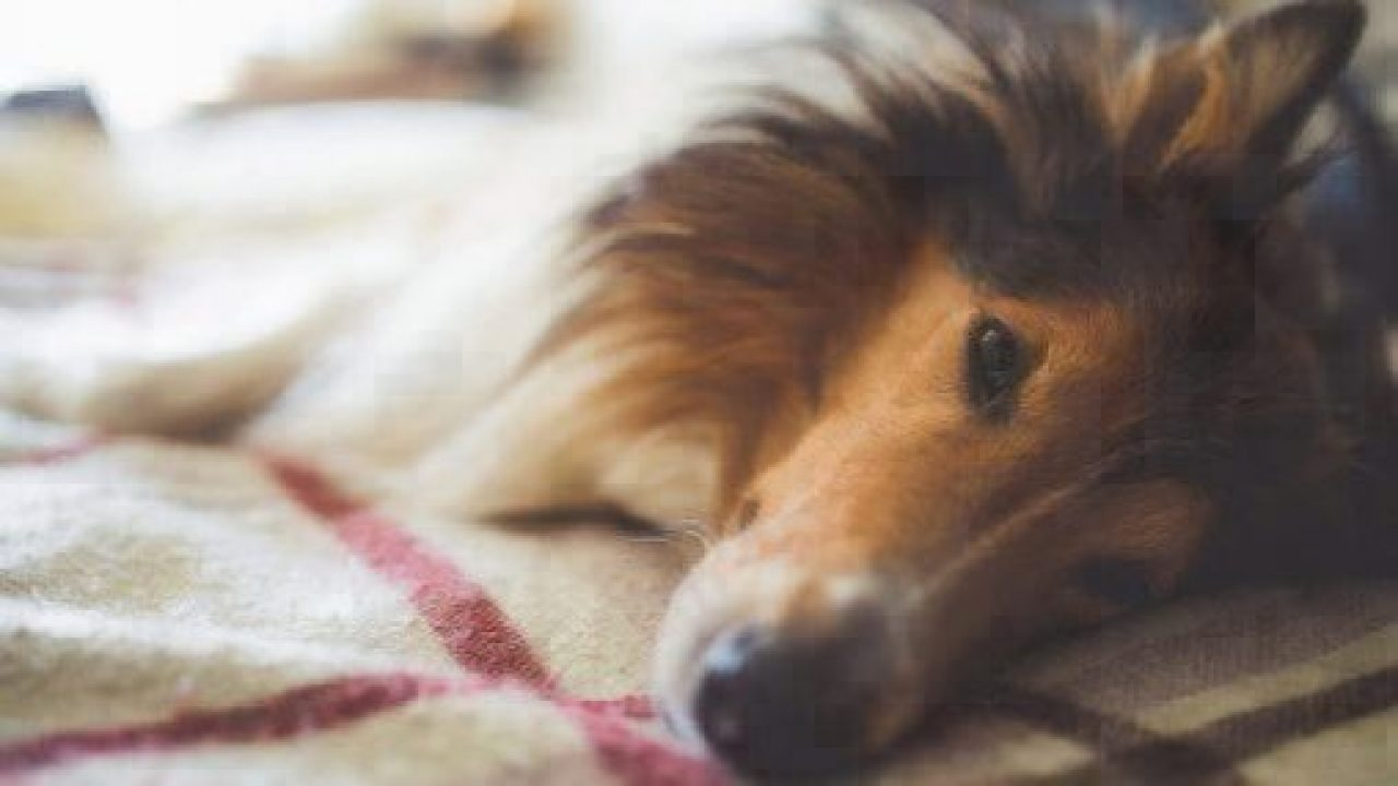 immodium for dogs
