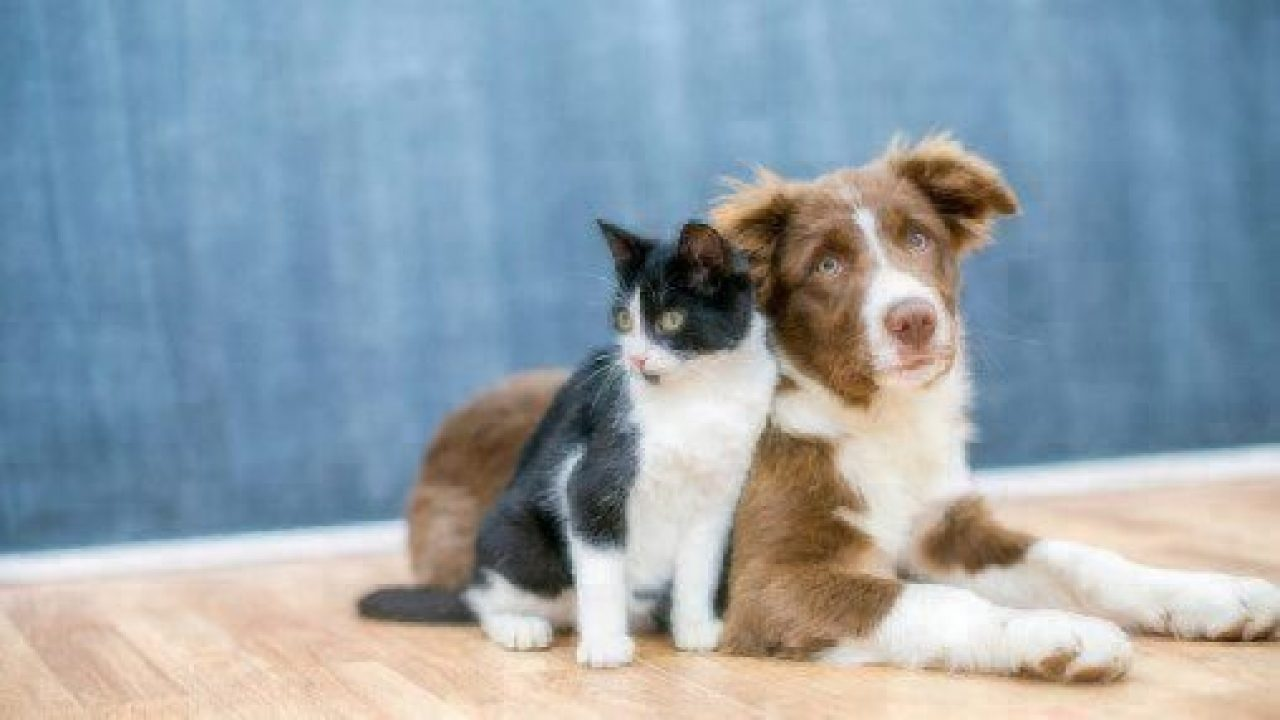 Are Cats Smarter Than Dogs? | Healthy Paws Pet Insurance