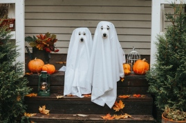 dogs in ghost costumes halloween