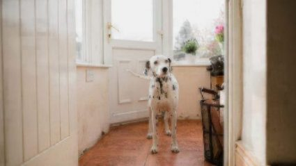 Keep Your Dog Calm When People Visit