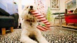 holiday toys and treats