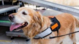 what to know about assistant dogs