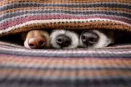 how dog noses help humans