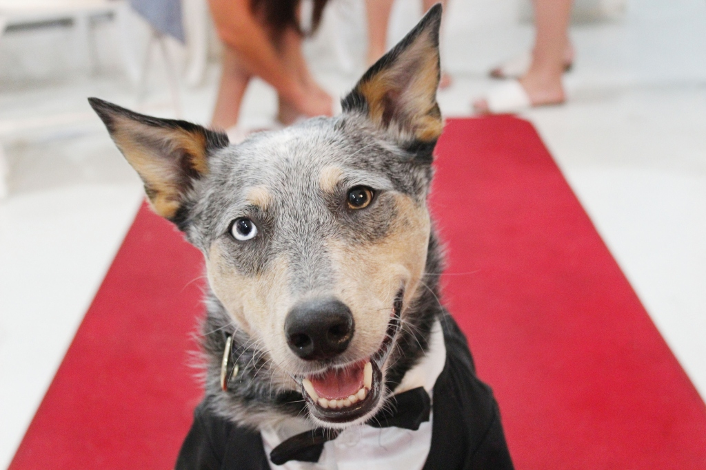 What TV Show Should Your Pet Star In? | Healthy Paws Pet ...