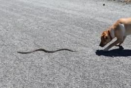 dog snake bites