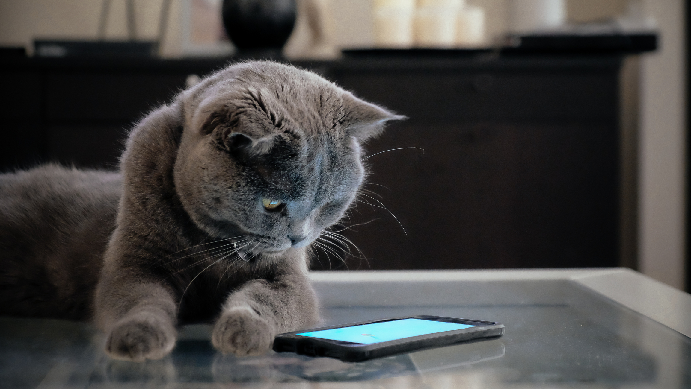 Can Cats See Phone Screens? | Healthy Paws Pet Insurance