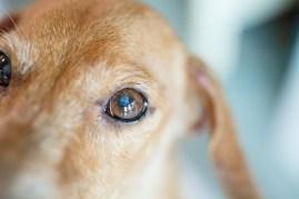 dog going blind