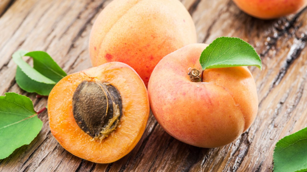 Can Dogs Eat Apricot Healthy Paws Pet Insurance