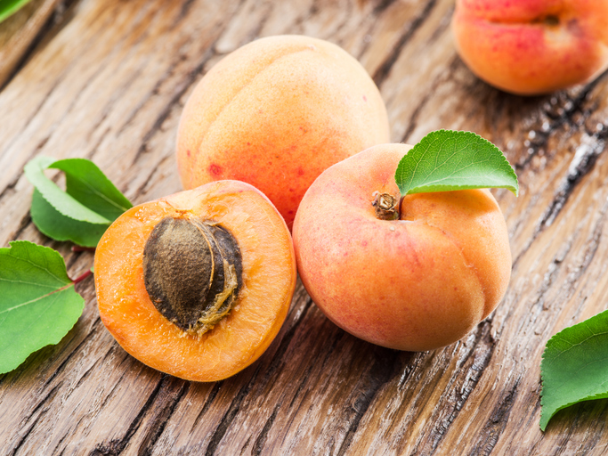 Can Dogs Eat Apricot? | Healthy Paws Pet Insurance