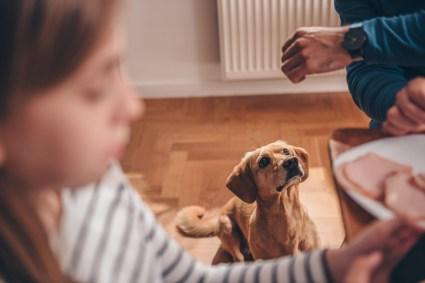 dog aggression mealtime