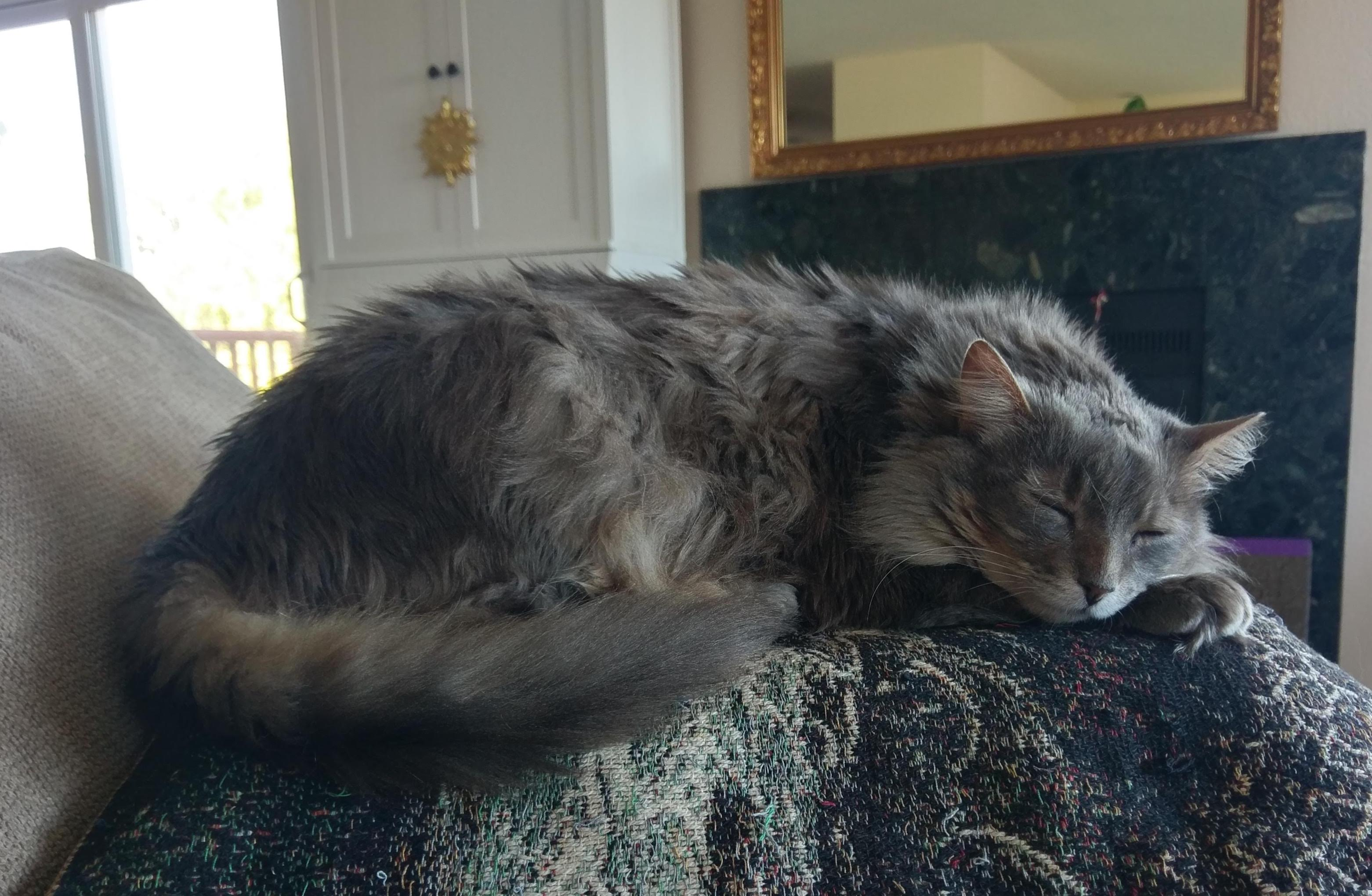 Asthma in Cats: Otis's Story | Healthy Paws Pet Insurance