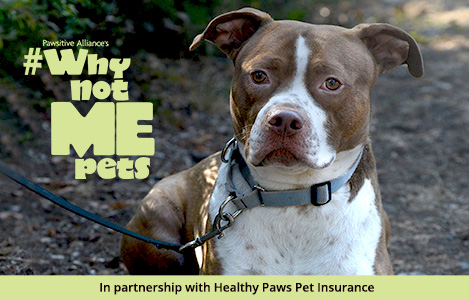 Why Not Me? Meet Rolph! | Healthy Paws Pet Insurance