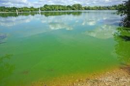 blue green algae lake