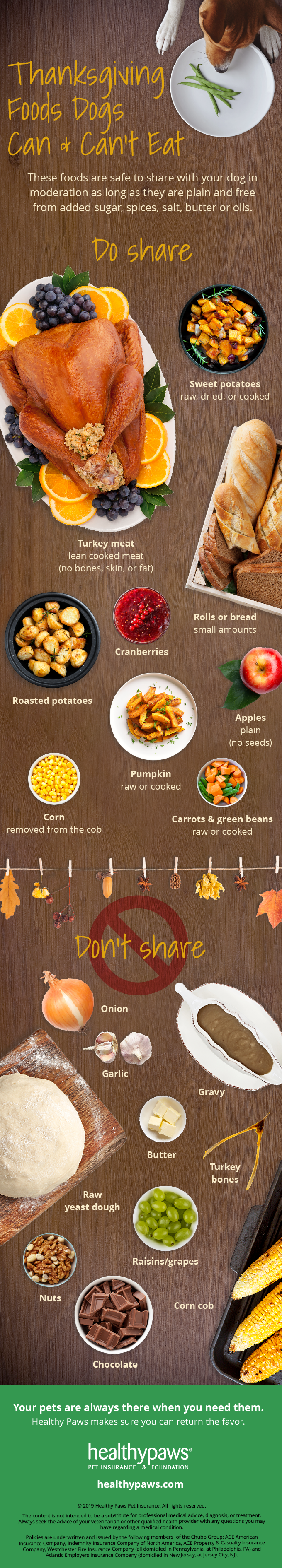 Thanksgiving foods pets infographic