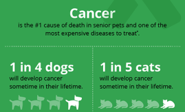 pet cancer infographic