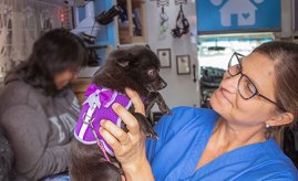 Dr. Hanna Ekstrom with a little dog.