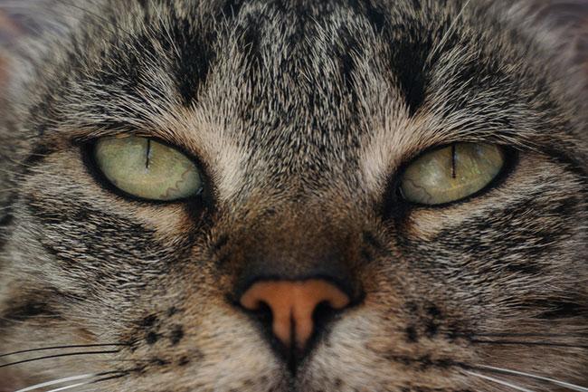 A senior cat