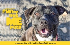 Seous is a dog that needs a home
