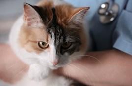 Cat at vet.