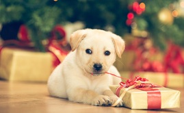 Puppy with present