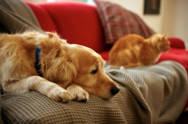 sad dog and cat on couch