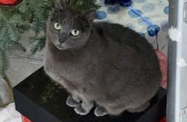 Hugo the cat