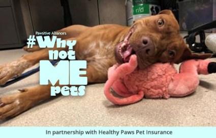 Nana, a mixed breed dog, needs a home