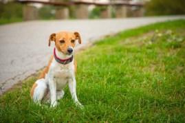 lost dog sitting in grass