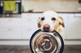 dog holding empty dog food bowl