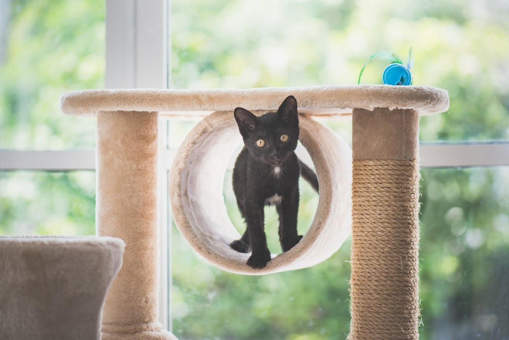 How to Catify Your Home | Healthy Paws Pet Insurance