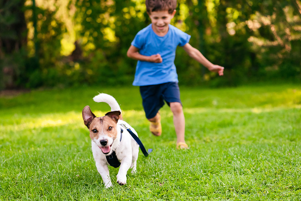 Dog running: Overexertion can cause heat stroke in pets