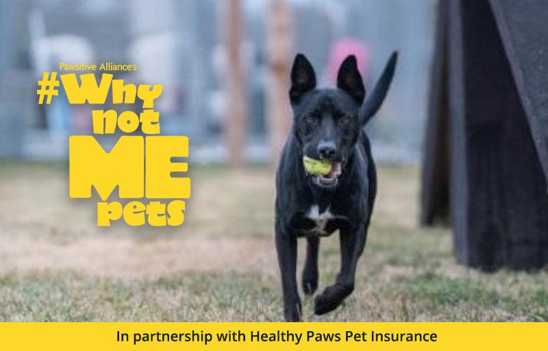 Why Not Me? Meet Hoobert! | Healthy Paws Pet Insurance
