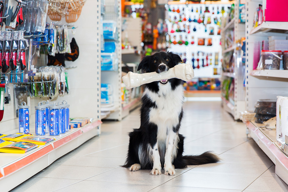 Dog in a pet store with bone