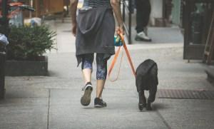 person walking black lab dog on sidewalk
