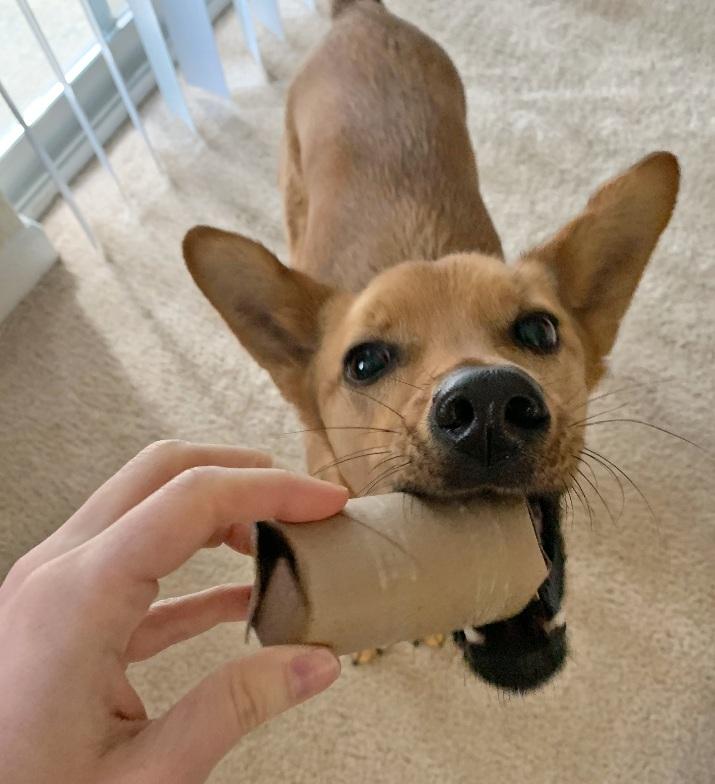 dog taking toilet paper tube