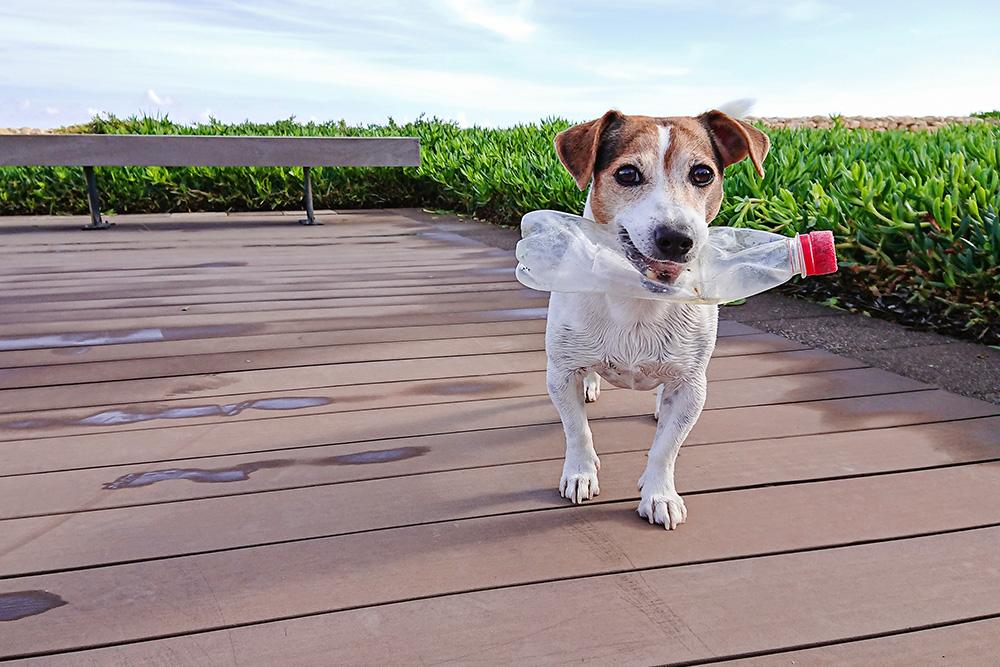 Dog with plastic bottle