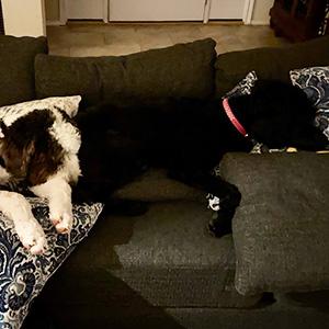 Shilah Rayne and Paisley Jane dogs
