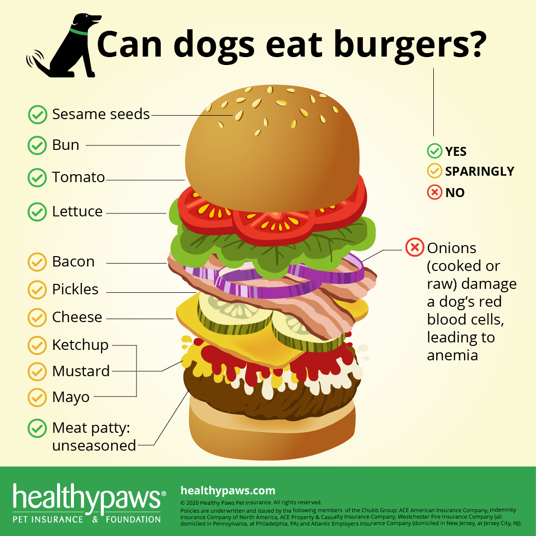 can dogs eat burgers infographic