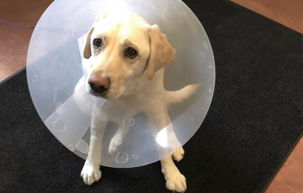 Blossom the lab with a cone
