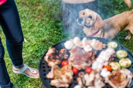 dog waiting by barbecue