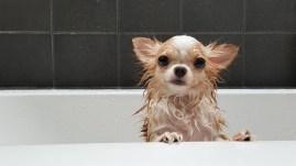dog in the bath