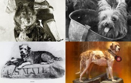 Hero dogs from history